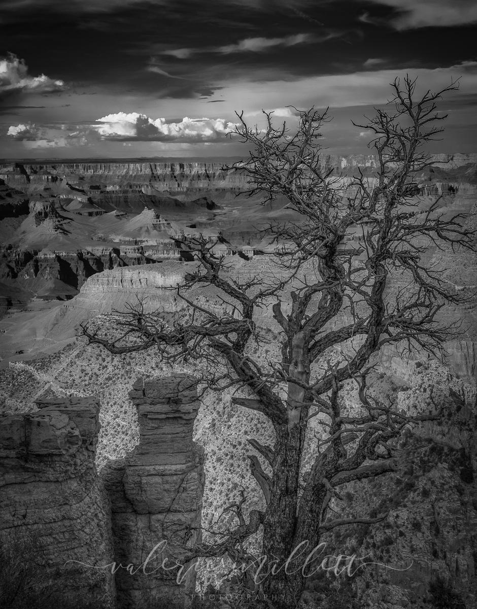 """Today's Photo Of The Day is """"Into The Grand"""" by Valerie Millett. Location: Grand Canyon National Park, Arizona."""