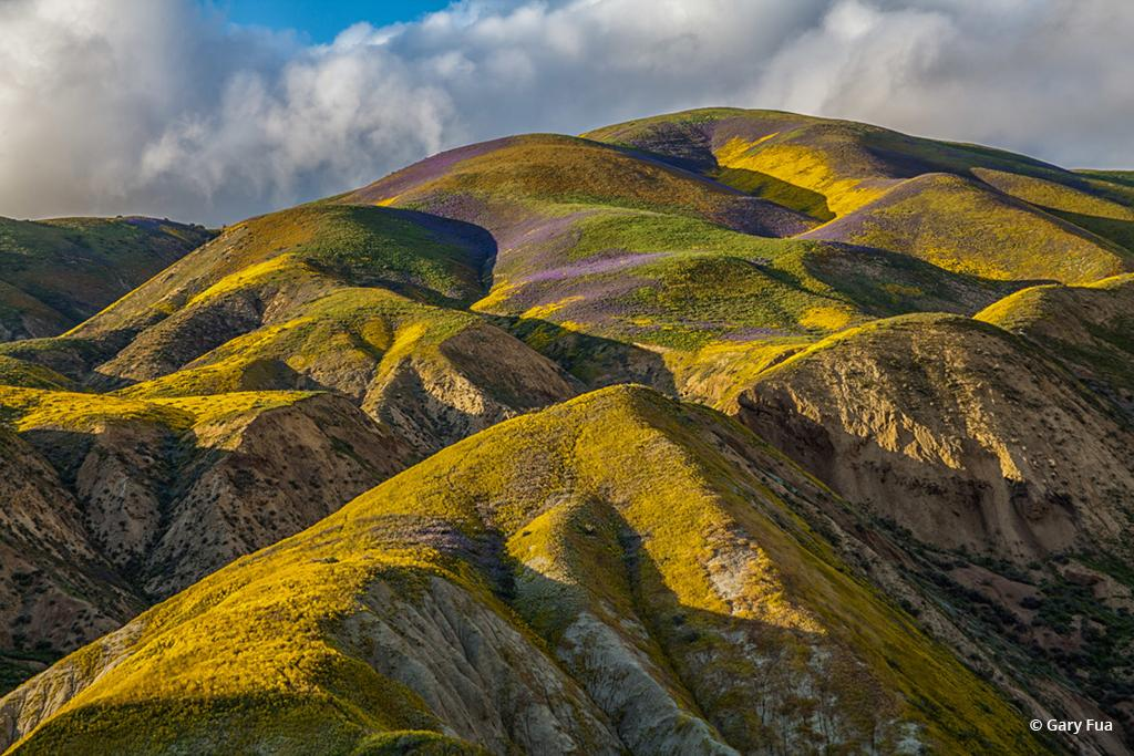 """Today's Photo Of The Day is """"Utopia"""" by Gary Fua. From the 2017 Super Bloom, Carrizo Plain National Monument, California."""
