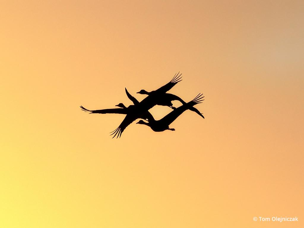 """Today's Photo Of The Day is """"A Silhouette at Sunset"""" by Tom Olejniczak. Location: Merced National Wildlife Refuge, California."""