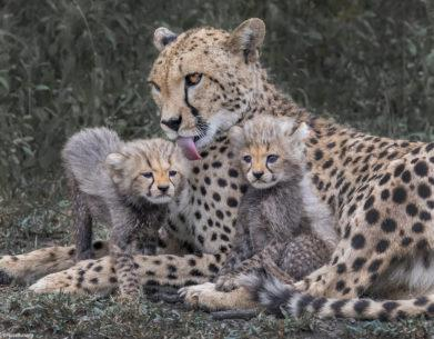 Wildlife Family Portraits