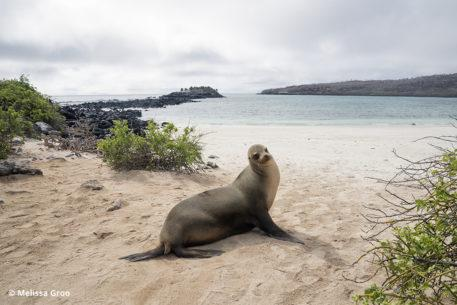 Sony a9 for wildlife photography: sea lion in the Galapagos.