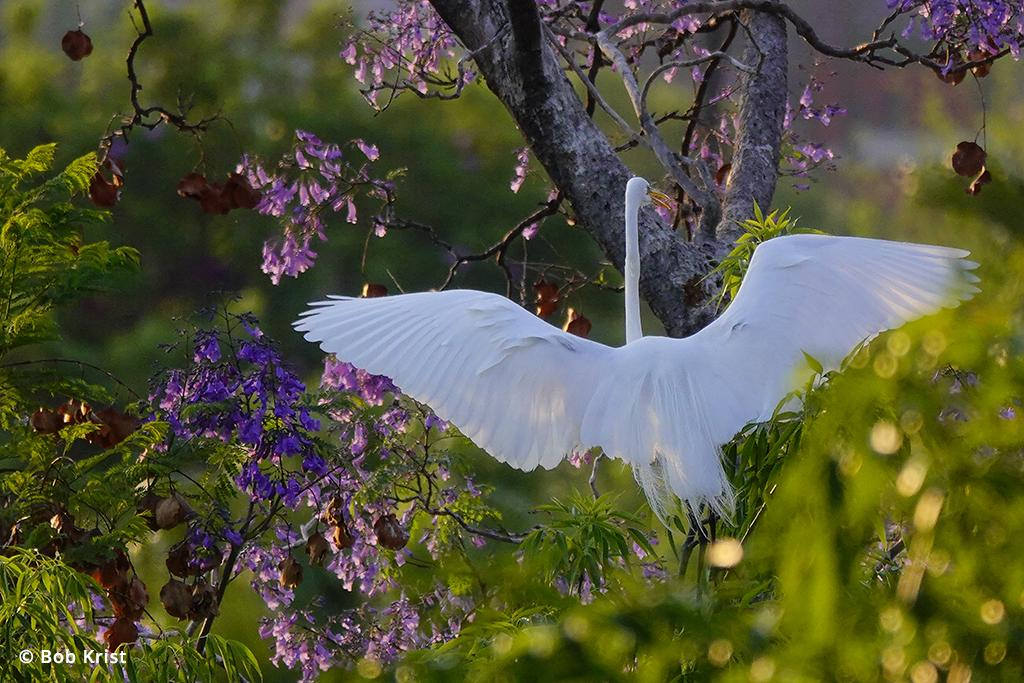 Photo of an egret taken with the Sony RX10 IV