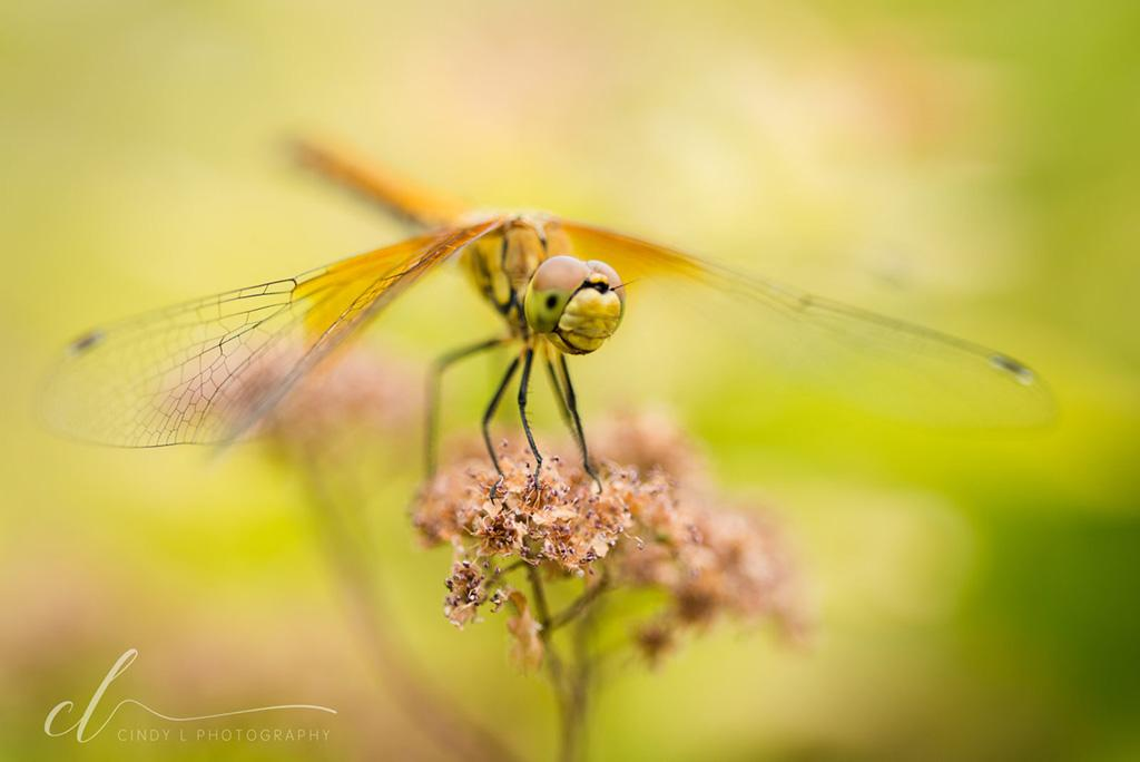 """Today's Photo Of The Day is """"Dragonfly Friend"""" by Cindy L Photography."""