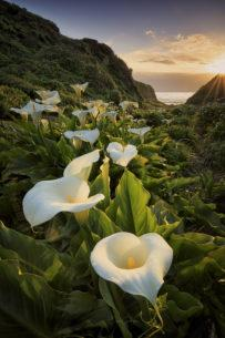 "Today's Photo Of The Day is ""The Valley of the Lilies"" by Erick Castellon. Location: Big Sur, California."