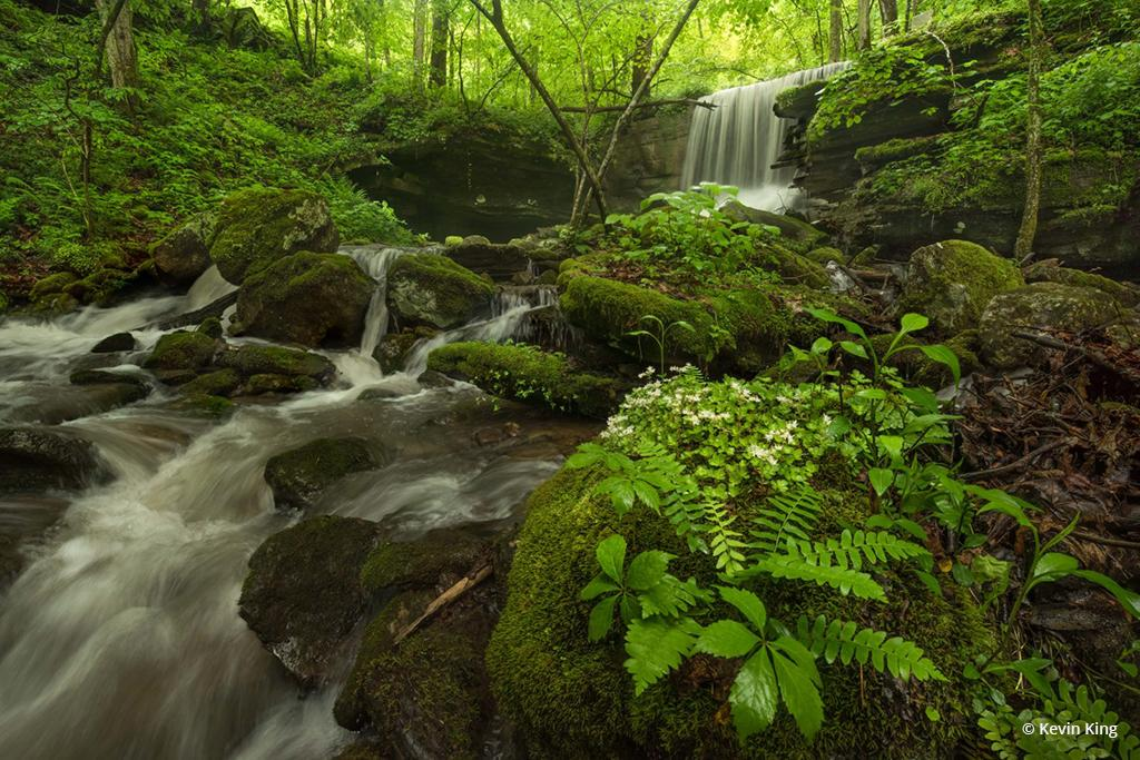 """Today's Photo Of The Day is """"Spring Greens"""" by Kevin King. Location: Big Branch, West Virginia."""