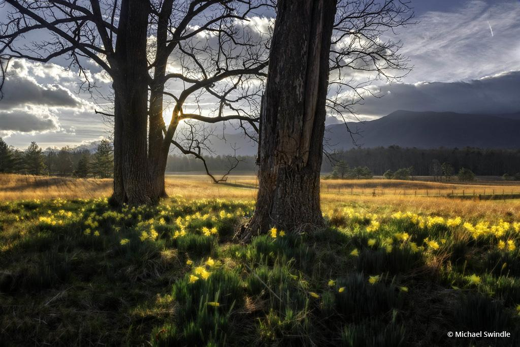 """Today's Photo Of The Day is """"Wildflowers in Morning Sun"""" by Michael Swindle. Location: Great Smoky Mountain National Park, Tennessee."""
