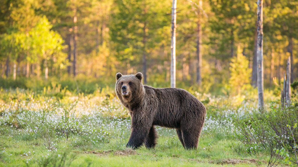 Best DSLR Cameras For Wildlife Photography - Outdoor Photographer