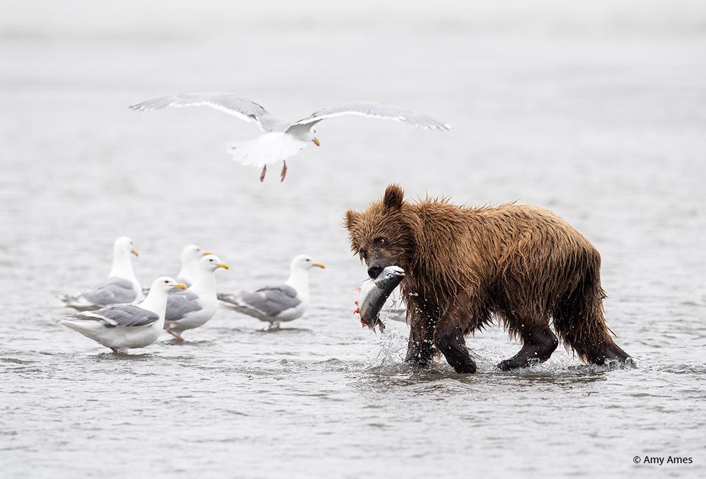 Fresh Catch, Lake Clark National Park and Preserve, Alaska