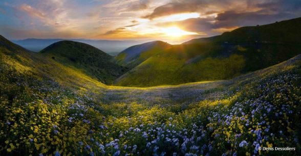 "Today's Photo Of The Day is ""Flowers Hills 2"" by Denis Dessoliers. Location: Taft, California."