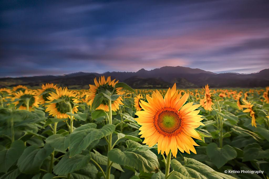"""Today's Photo Of The Day is """"One of a Kind"""" by Ketino Photography. Location: Waialua, Hawaii."""