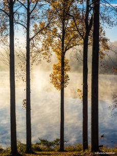 """Today's Photo Of The Day is """"Morning Mist on Clopper Lake"""" by Charlotte Couchman. Location: Seneca Creek State Park, Montgomery County, Maryland."""