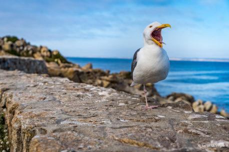 """Today's Photo Of The Day is """"What A Big Mouth You Have!"""" by Sarah McIntyre. Location: Pacific Grove, California."""