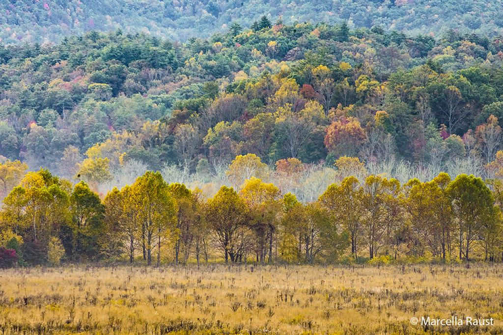 """Today's Photo Of The Day is """"Autumn in Cades Cove"""" by Marcella Raust. Location: Great Smoky Mountains National Park, Tennessee."""