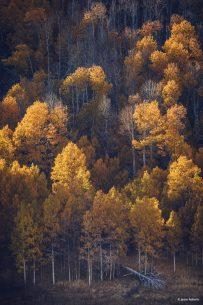 """Today's Photo Of The Day is """"Golden Light"""" by Jason Roberts. Location: Inyo National Forest, near Lee Vining, California."""