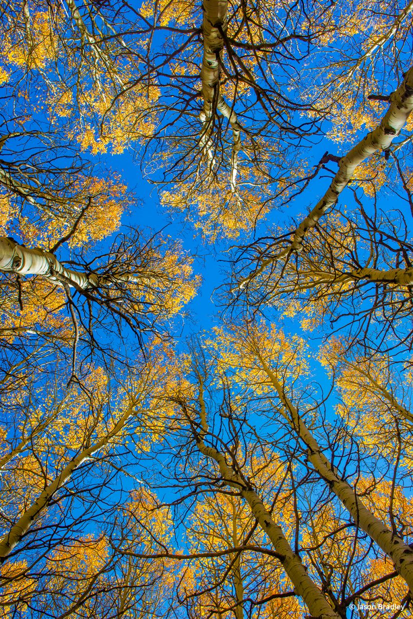 Be careful not to over do it when processing fall color photos