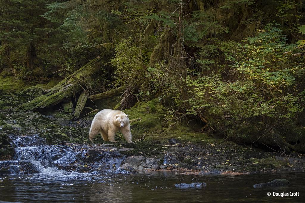 "Today's Photo Of The Day is ""Beyond Belief"" by Douglas Croft."" Location: Great Bear Rainforest, British Columbia."
