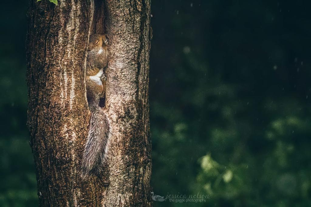 "Today's Photo Of The Day is ""Hiding from the Rain"" by Jessica Nelson. Location: Maryland."