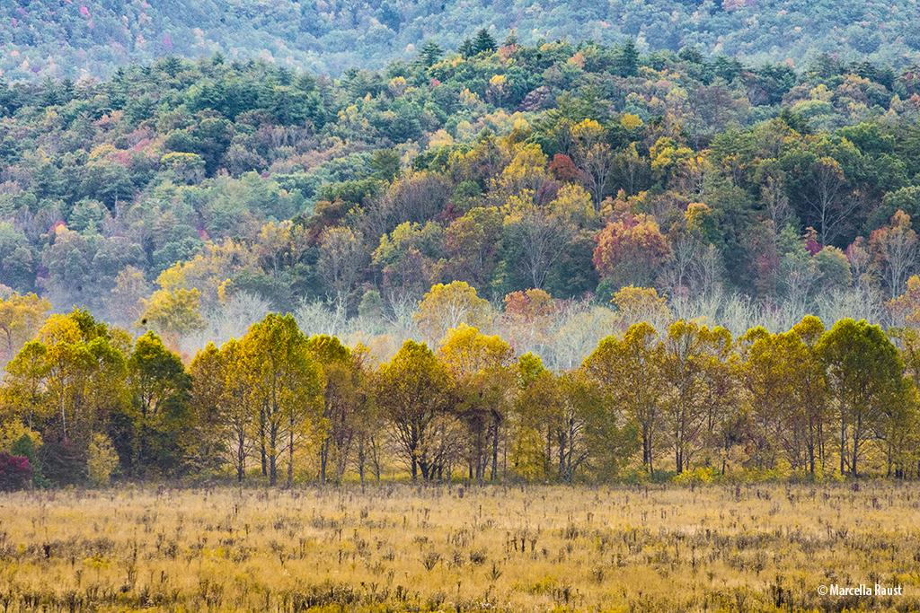 Assignment #351: Fall Color 2018