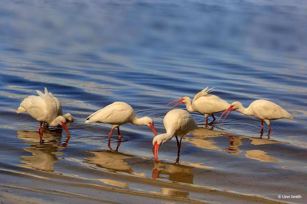 """Today's Photo Of The Day is """"Shoreline Search"""" by Linn Smith. Location: Lake Jesup, Seminole County, Florida."""