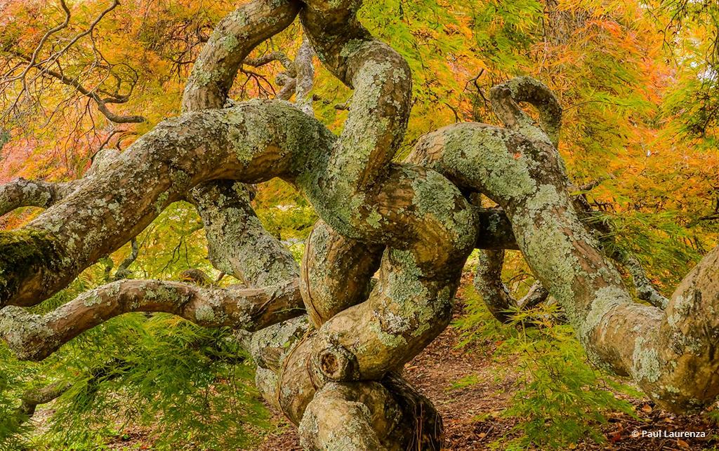 "Today's Photo Of The Day is ""Japanese Maple"" by Paul Laurenza. Location: Northern Virginia."