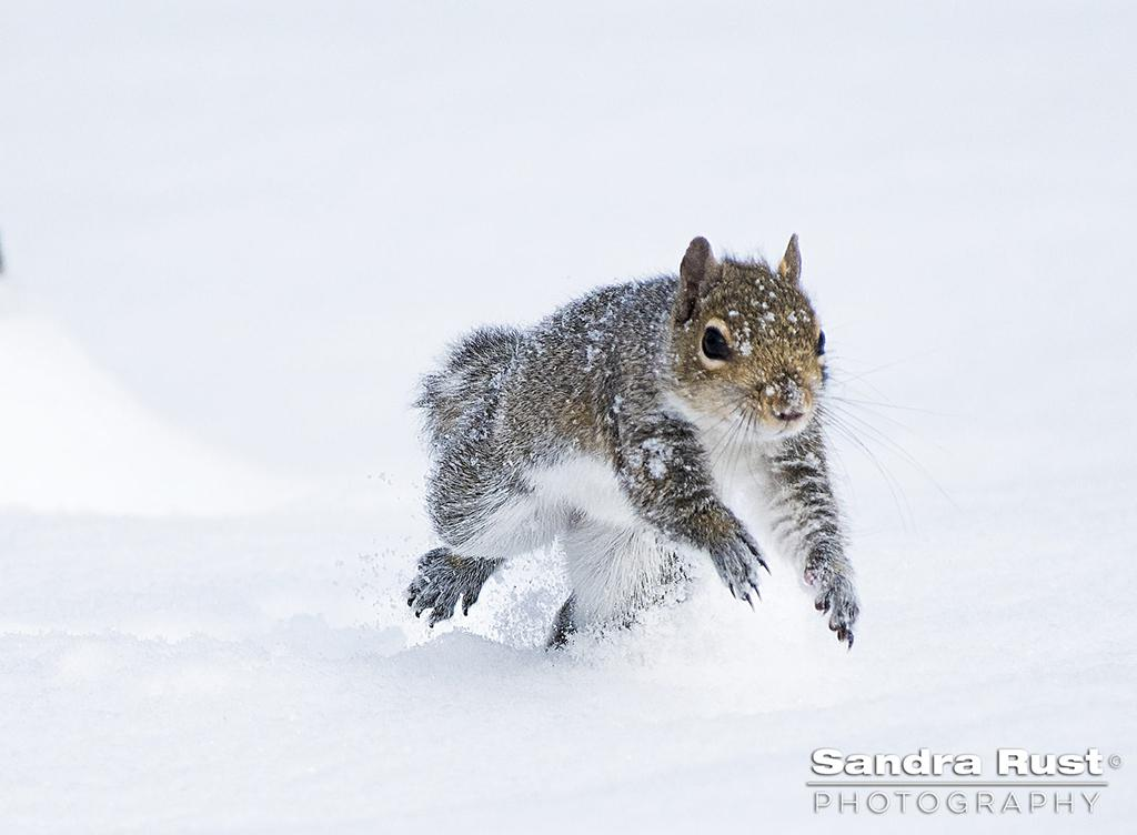 "Today's Photo Of The Day is ""Dashing Through The Snow"" by Sandra Rust."