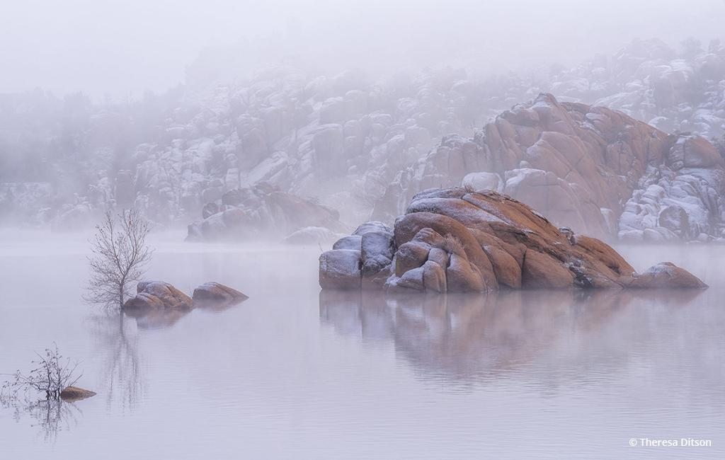 "Today's Photo Of The Day is ""Frosted"" by Theresa Ditson. Location: Prescott, Arizona."