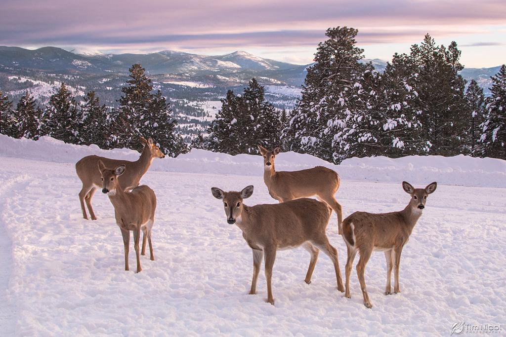 "Today's Photo Of The Day is ""Whitetail in the Mountains"" by Tim Nicol. Location: Republic, Washington."