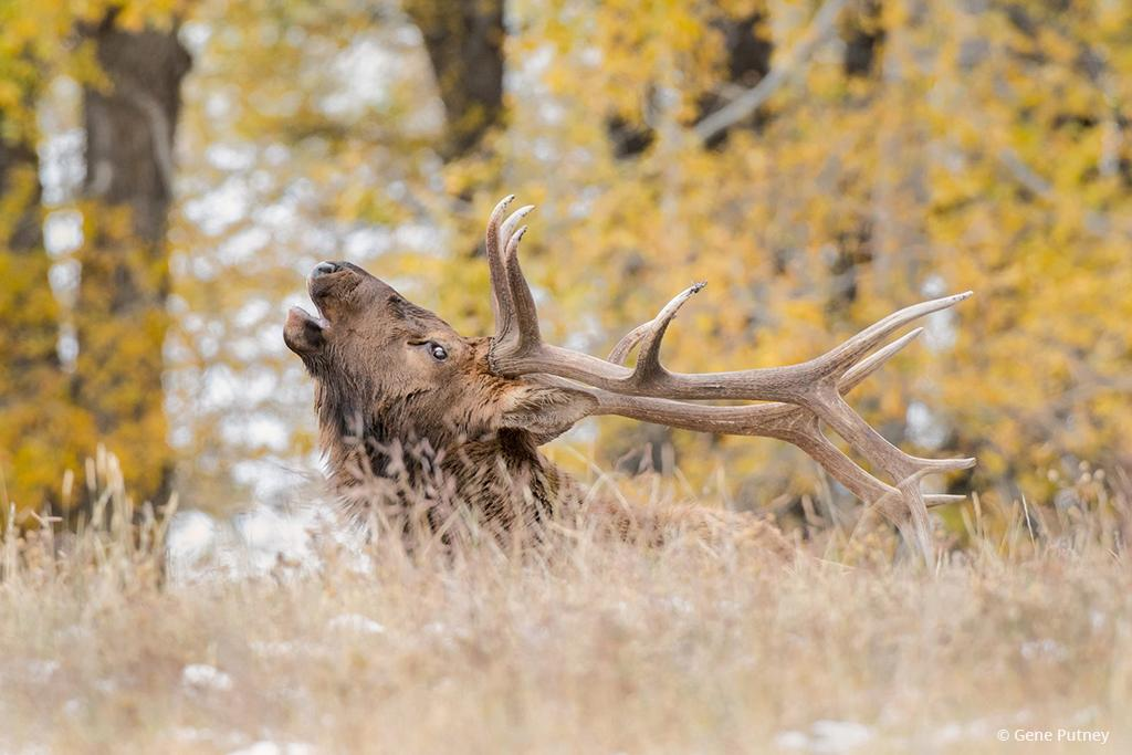 Fall Wildlife Assignment Winner Gene Putney