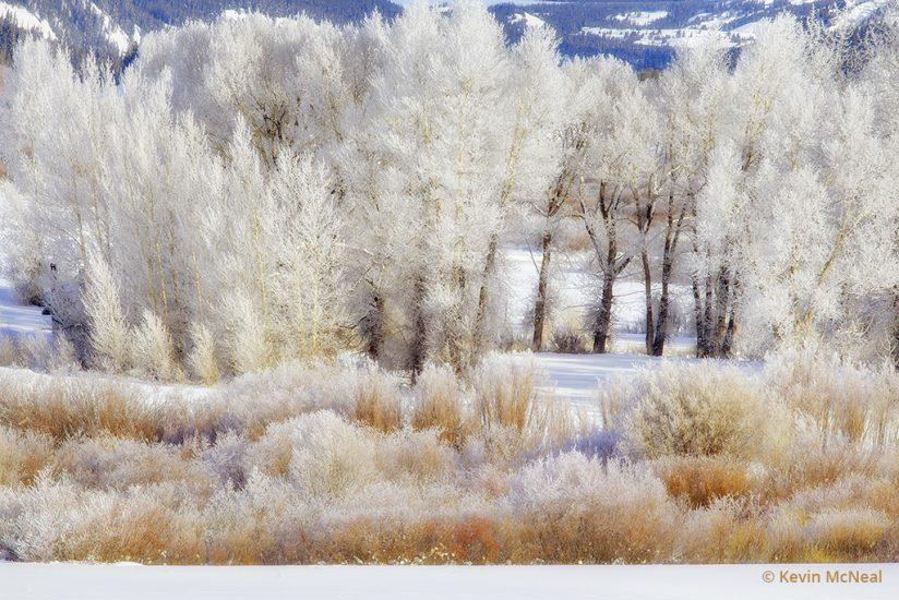 Winter photography in Grand Teton
