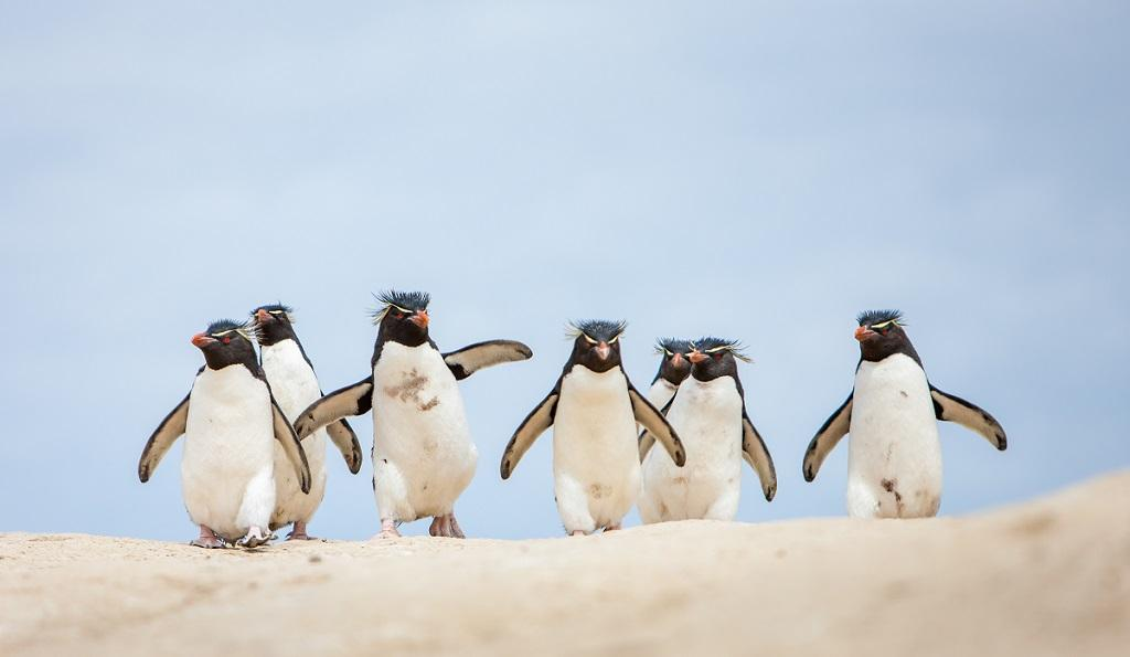 Photographing The Falkland Islands, South Georgia And Antarctica