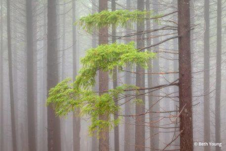 """Today's Photo Of The Day is """"Misty Forest, Siskiyou County"""" by Beth Young. Location: Castle Crags State Park, California."""