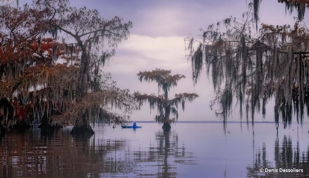 "Today's Photo Of The Day is ""The Swamp"" by Denis Dessoliers. Location: Lake Fausse Pointe State Park, Louisiana."
