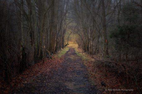 """Today's Photo Of The Day is """"Gloomy Path"""" by Michael Swindle. Location: Harpeth River State Park, Tennessee."""
