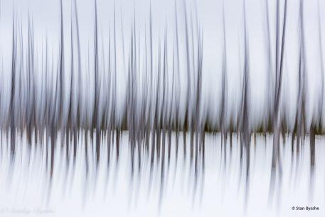 """Today's Photo Of The Day is """"Winter Pines"""" by Stan Bysshe. Location: Yellowstone National Park, Wyoming."""