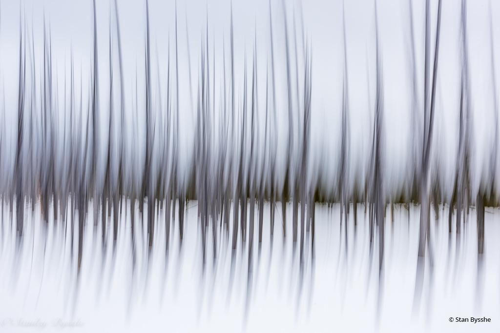 "Today's Photo Of The Day is ""Winter Pines"" by Stan Bysshe. Location: Yellowstone National Park, Wyoming."