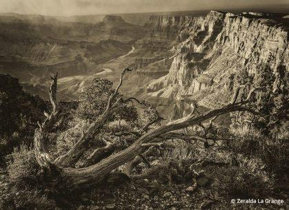 """Today's Photo Of The Day is """"That Way"""" by Zeralda La Grange. Location: Grand Canyon National Park, Arizona."""