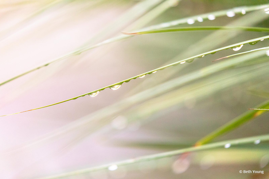 "Today's Photo Of The Day is ""Wet Grass Abstract"" by Beth Young."