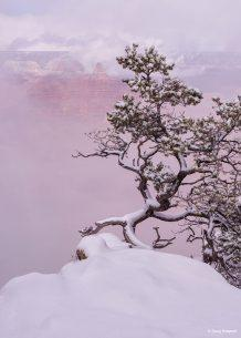 "Today's Photo Of The Day is ""Winter Bonsai"" by Doug Koepsel. Location: Grand Canyon National Park, Arizona."