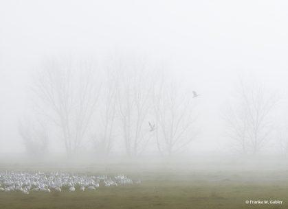 """Today's Photo Of The Day is """"Lifting Fog, San Joaquin Valley"""" by Franka M. Gabler. Location: San Joaquin Valley, California."""