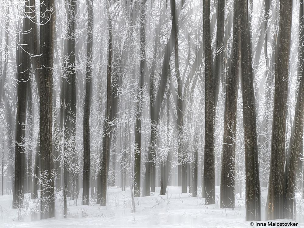 "Congratulations to Inna Malostovker for winning the recent Snow Scenes Assignment with the image, ""Cold Winter."""