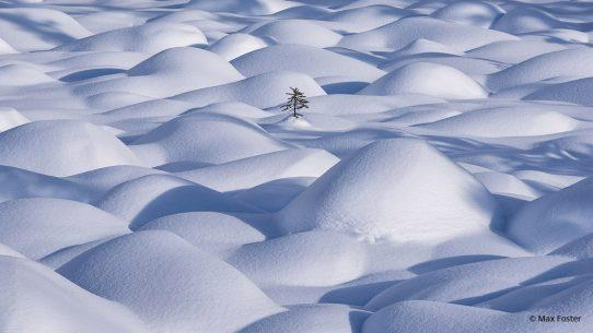 """Today's Photo Of The Day is """"Determination"""" by Max Foster. Location: Canadian Rockies."""