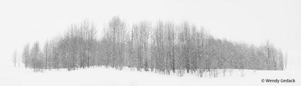 "Today's Photo Of The Day is ""Embrace The Snow"" by Wendy Gedack. Location: Crested Butte, Colorado."