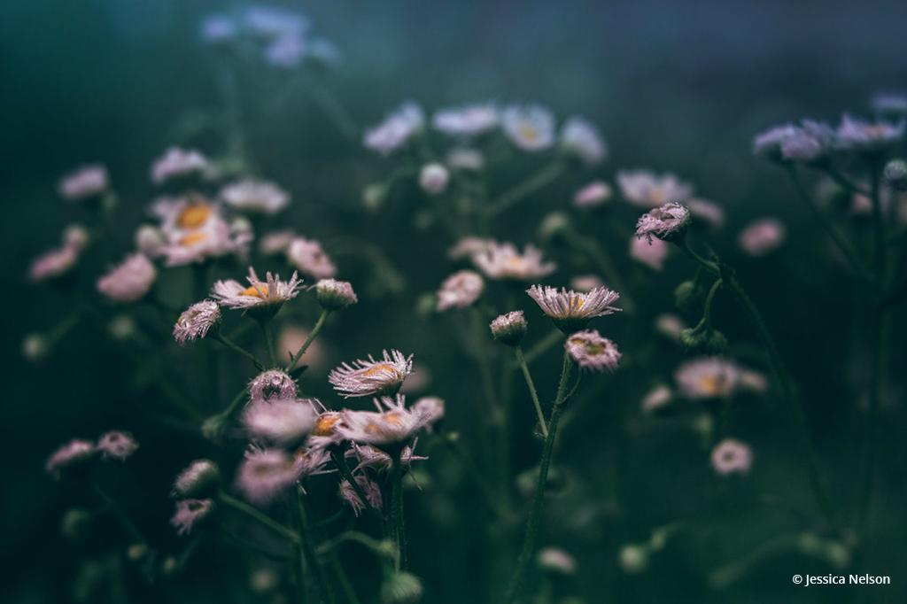 Assignment #373: Wildflowers And Super Blooms