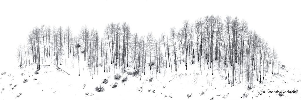 """Congratulations to Wendy Gedack for winning the recent Winter Panoramas And Vertoramas Assignment with the image, """"Layers of Fallen Snow."""""""