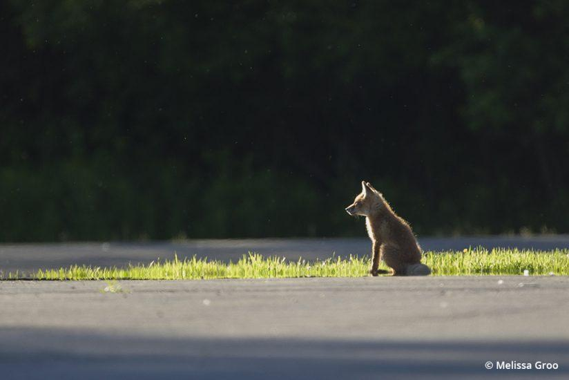 Feeding Wildlife: Food For Thought