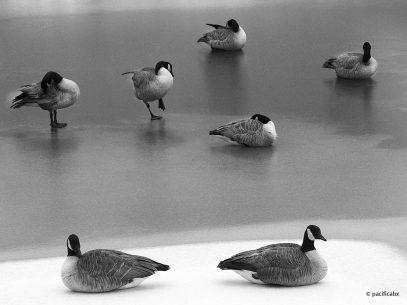 """Today's Photo Of The Day is """"Magnificent Seven"""" by pacificabx. Location: Leawood, Kansas."""