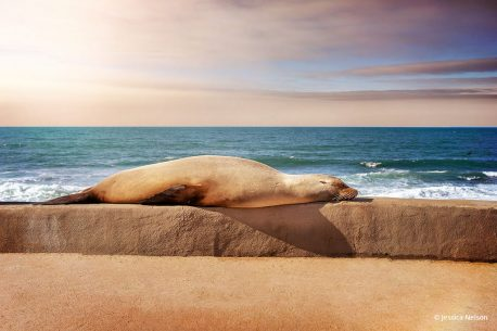 "Today's Photo Of The Day is ""Sea Lion on the Walkway Ledge"" by Jessica Nelson. Location: La Jolla Cove, California."