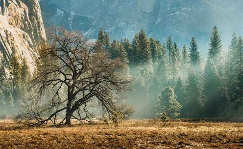 "Today's Photo Of The Day is ""Enchanted Morning"" by Siu Lau. Location: Yosemite National Park, California."