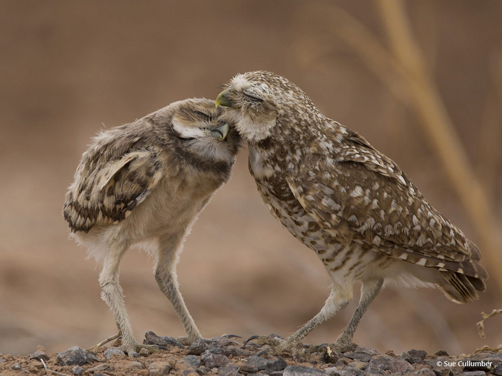 "Today's Photo Of The Day is ""Family Love"" by Sue Cullumber. Location: Gilbert, Arizona."