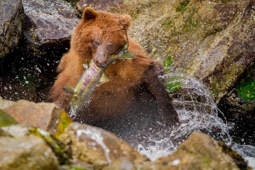 Think Like A Naturalist To Become A Better Wildlife Photographer!